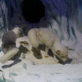 Харбинский полярныйаквариум