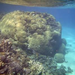 Duna Reef