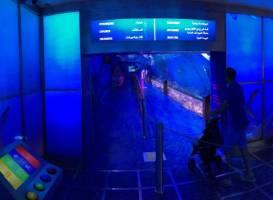 Дубайский аквариум и подводный зоопарк