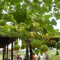 Tra Que Vegetable Village
