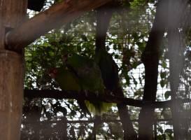 Botanical Garden of Guayaquil