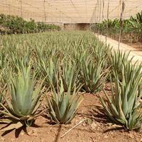 Aloe Park
