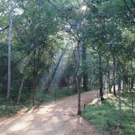 Popham's Arboretum