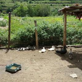 El Albergue Farm