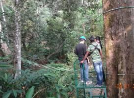 Fun Forest Adventure Park