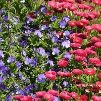 Jawaharlal Nehru Memorial Botanical Gardens