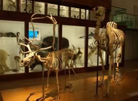 Musee d'histoire naturelle de Nantes