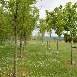 Ringfinnan Garden of Remembrance