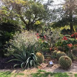 Ein Gedi Botanical Garden
