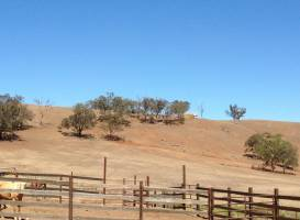 Jackeroo Ranch
