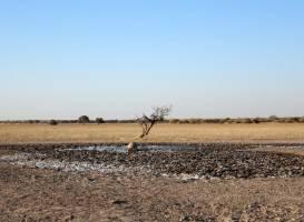 Khutse Game Reserve