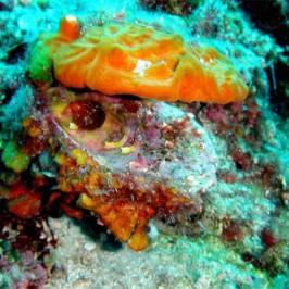 Rabac Diving Resort