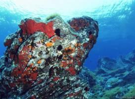 Amphibia Diving Center Panarea