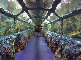 Туннельный океанариум