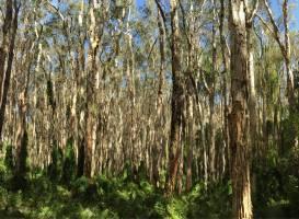 Paperbark Forest Walk