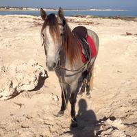 Ranch Yassmina Djerba La Douce