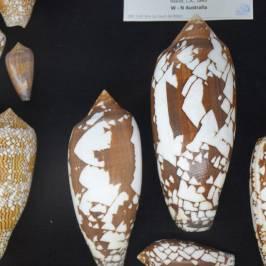 Musée du Coquillage