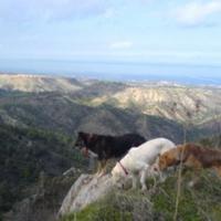 Kyrenia Animal Rescue