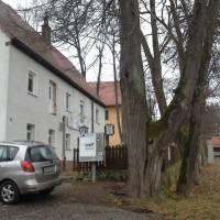Gruner Baum Nurnberg Brunn