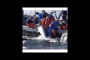 Испания: в Андалусии туристы смогут заняться ловлей тунца