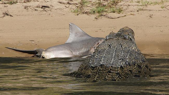 Австралия: Битва акулы и крокодила - победителя выявил фотофиниш