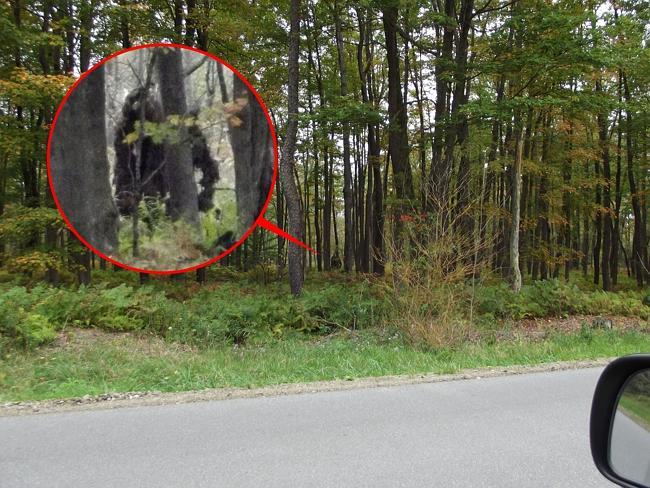США: В лесах Пенсильвании водится снежный человек. И не один