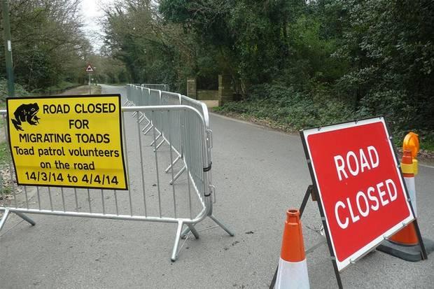 Великобритания: Полиция перекрывают движение, освобождая дорогу для жаб