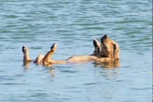 В Греции появился пляж для домашних животных