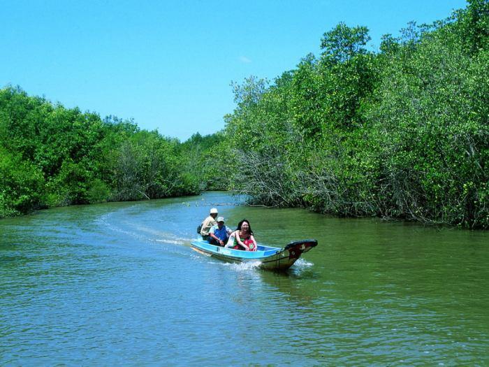 Вьетнам: Мангровые леса Кан Зяо вырубают, чтобы привлечь туристов