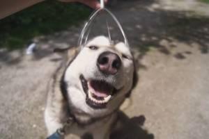 Бешеный енот и счастливая хаски — итоги недели на TURIZM.RU