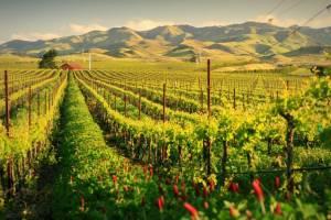 В Италии предлагают стать виноделом за 400 евро