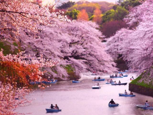 Визы в Японию будут выдавать по новой системе, Туристам Коломны, Россия Достопримечательности