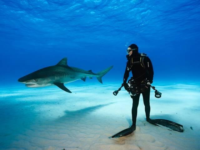 Туристов предупредили об акулах в Сиамском заливе, Туристам Коломны, турфирмы Таиланд