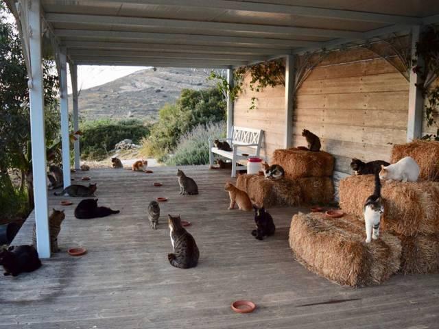 Жить в Греции, ухаживать за котами и получать 500 евро в месяц, Туристам Коломны, турфирмы музей Греция