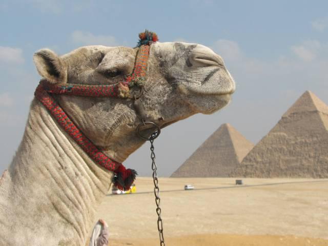 Египет не сомневается насчет чартерных перевозок из России в Шарм эль Шейх, Туристам Коломны, стоит ли ехать Россия аэропорт