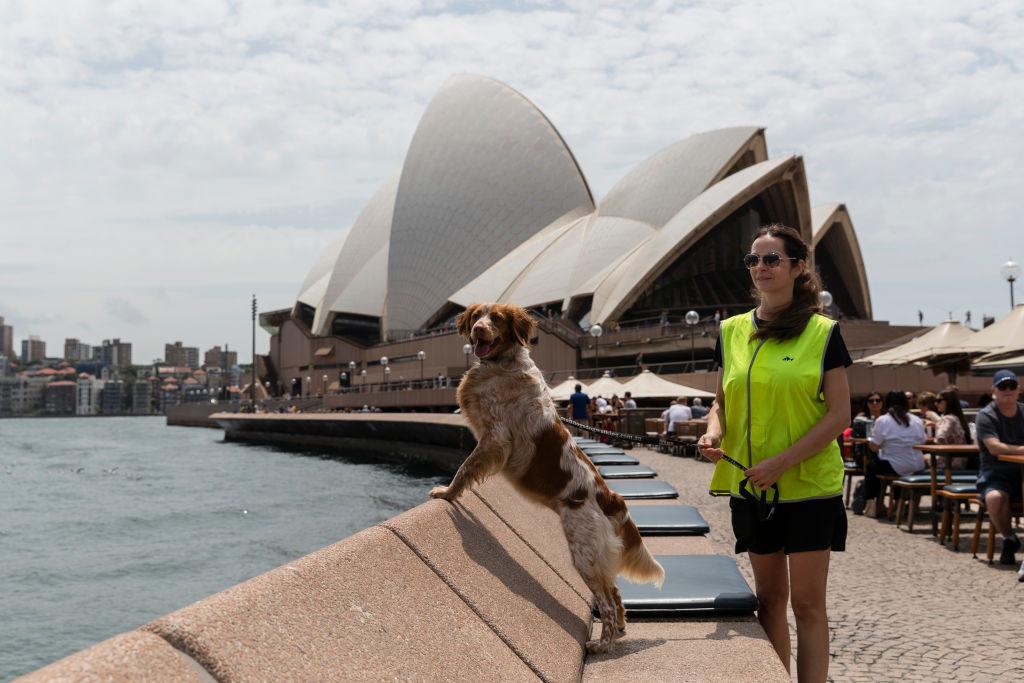 Собаки встали на защиту картошки фри от жадных чаек в Австралии, Туристам Коломны, Путешествие