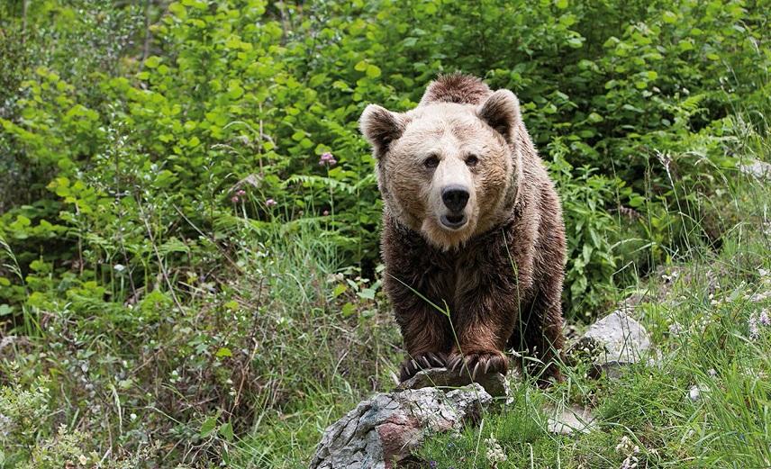 Топ величайших приключений в мире возглавила слежка за дикими медведями, Туристам Коломны, Испания Германия виза бассейн