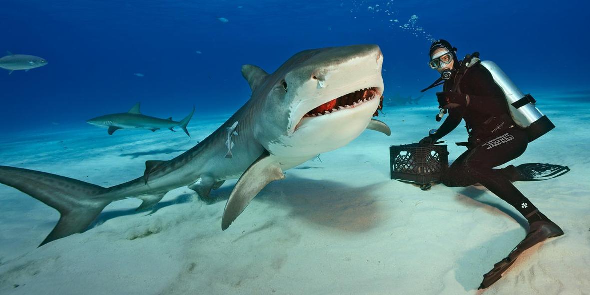 Акулья Палау вновь прославилась: названы лучшие экологические курорты мира, Туристам Коломны, Туризм