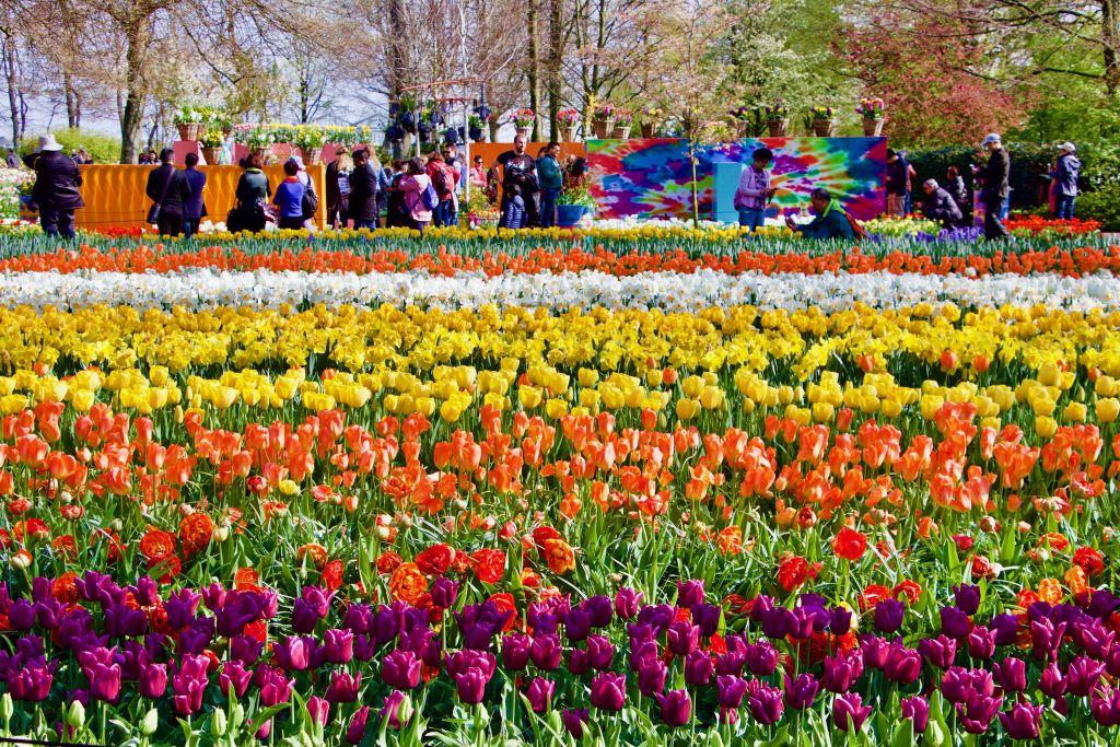 В Голландии туристов просят следить за ногами и не топтаться, Туристам Коломны, турфирмы
