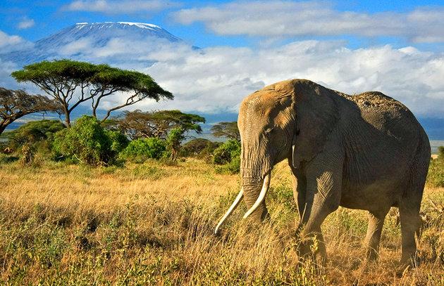 Как оформить визу в Кению?