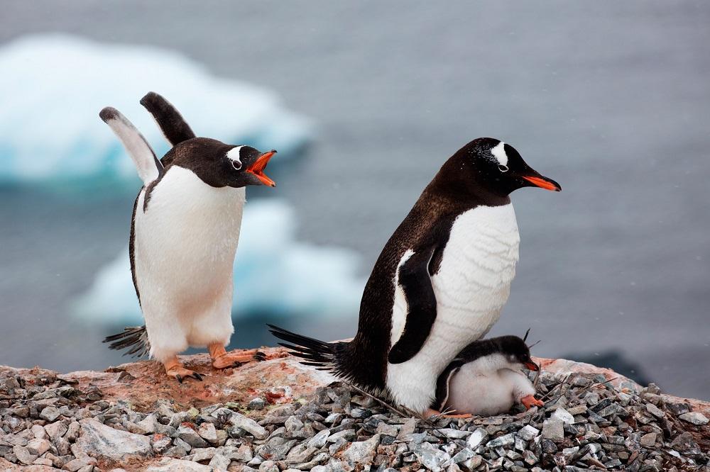 Почему Антарктида – самое новогоднее направление для путешествий