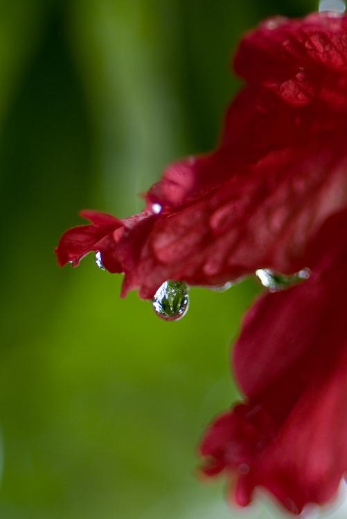 """Лучшие украшения для цветов - """"водяные бриллианты"""""""