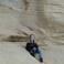 Моя дочь и скалы Гозо