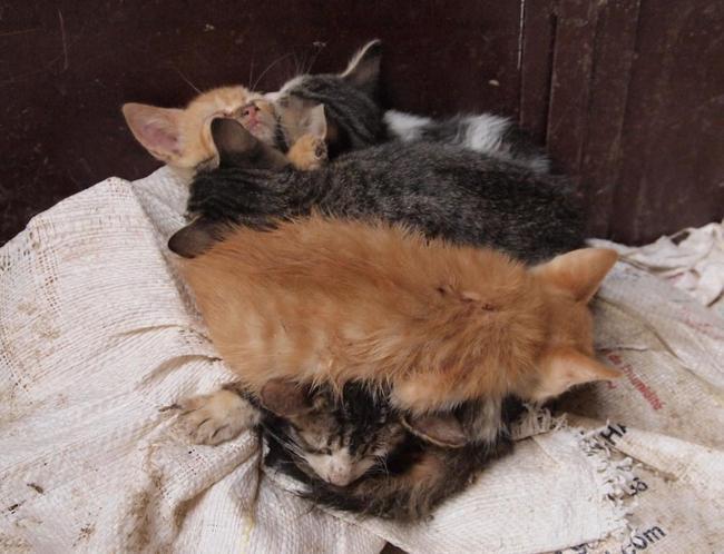 В хитросплетении улиц Феса котята тоже спят в хитросплетении