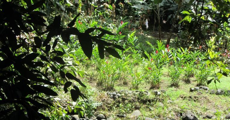 Природа Таити внутри острова
