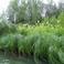 Аромат белоголовника стоит над рекой