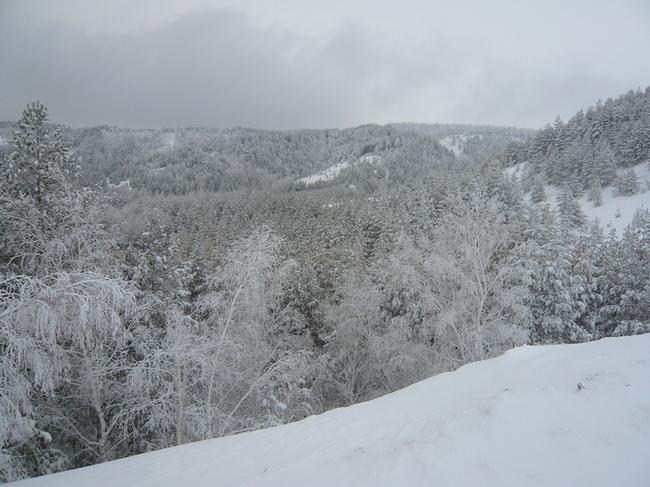 Хвалынский горнолыжный курорт. Лес