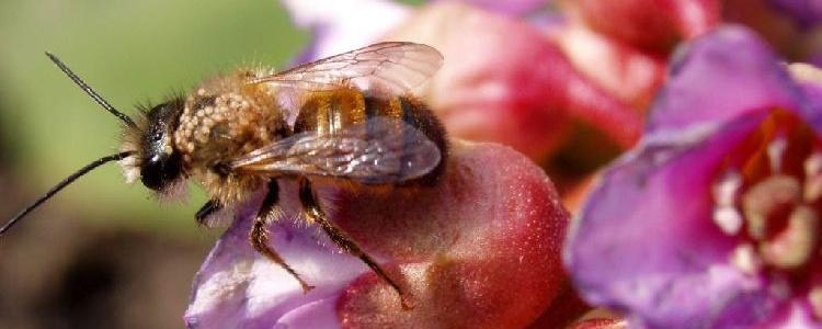 Пчела внашем саду