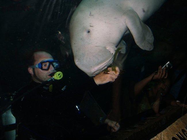 Океонариум. 82м. туннель и 2500 обитателей