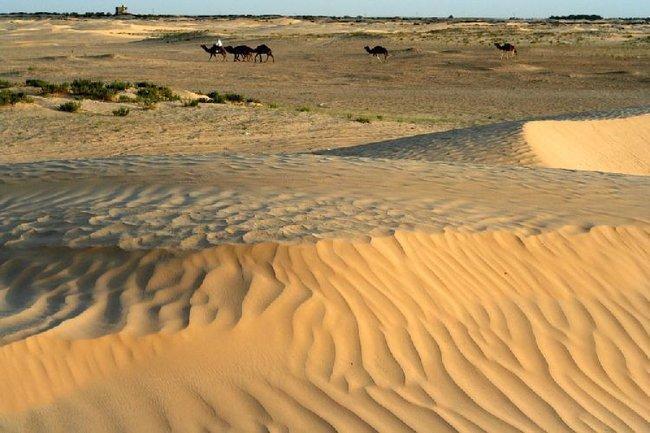 Дуз. Снято в ходе верблюжачьей прогулки